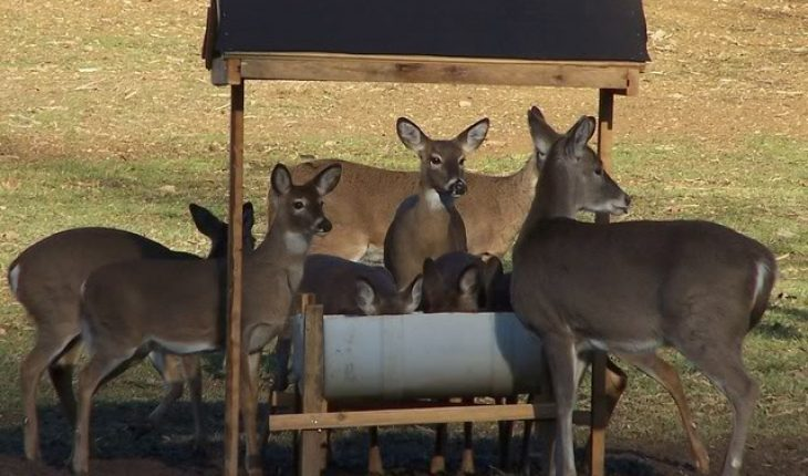 how to build a deer feeder