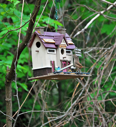 How to build a bird feeder diy and repair guides for How to build a bird feeder easy