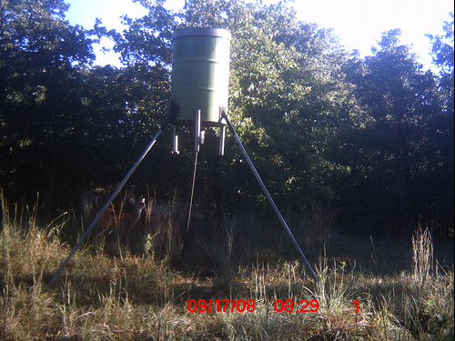 how to build a wooden deer feeder